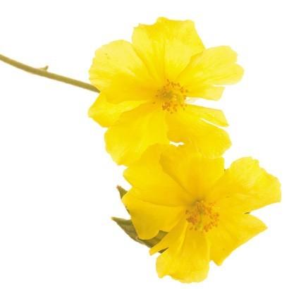 fleur-de-bach-234238