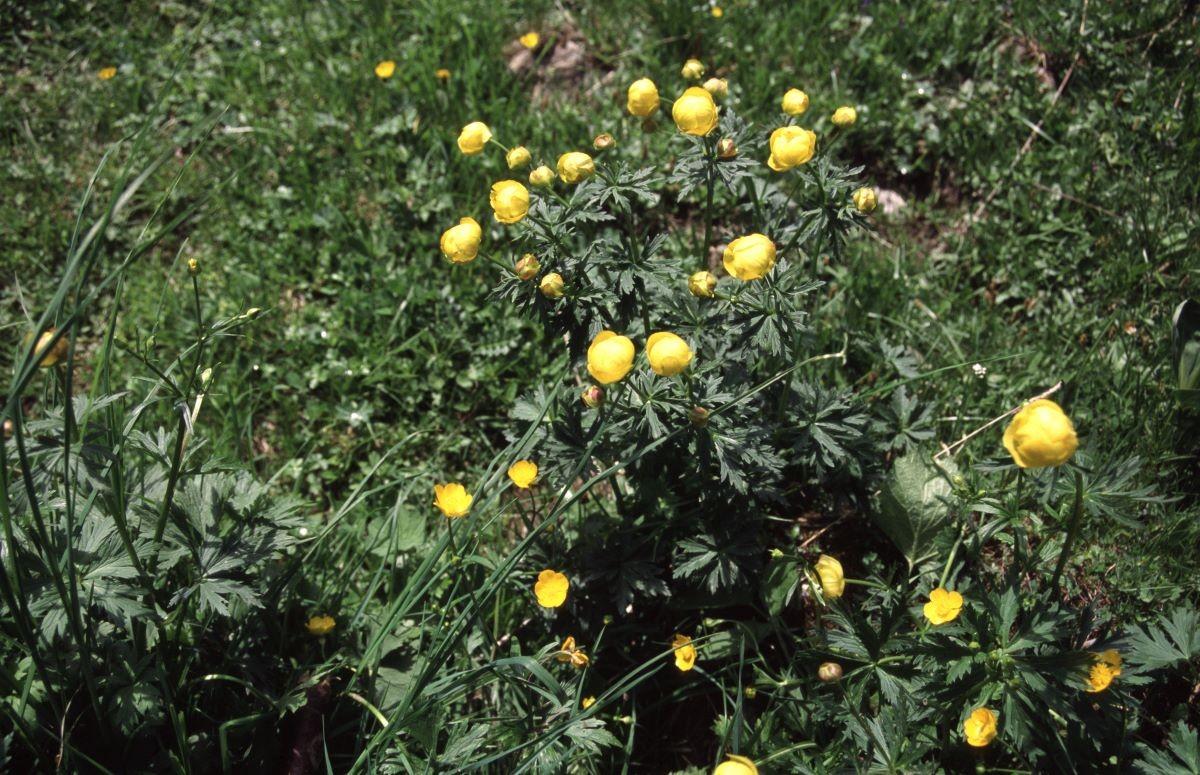 fleurs02-231130