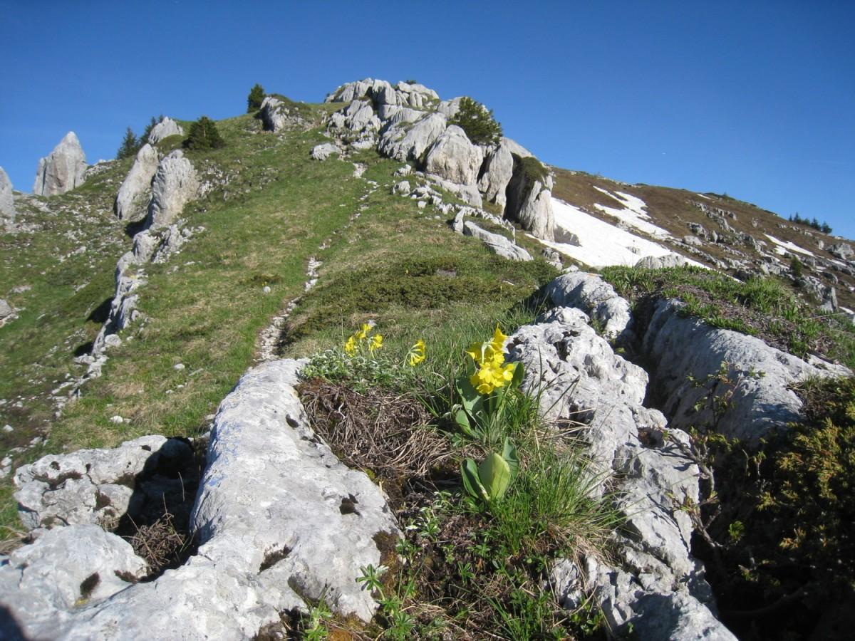 roc-aventure-bureaudesguides-site-301730