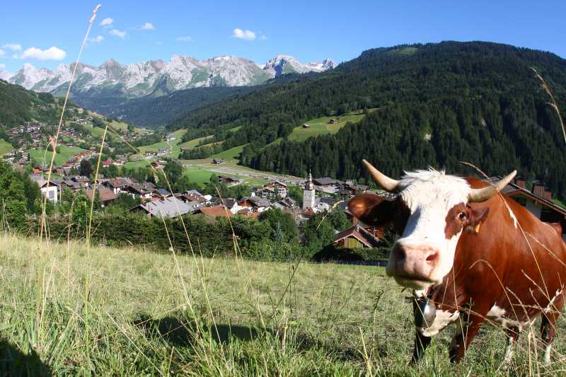 Court s jour saveur de nos montagnes meubl le grand for Chambre agriculture haute savoie